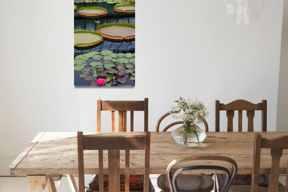"""Water Lilies And Platters 2&quot  (2011) by LightHeart"