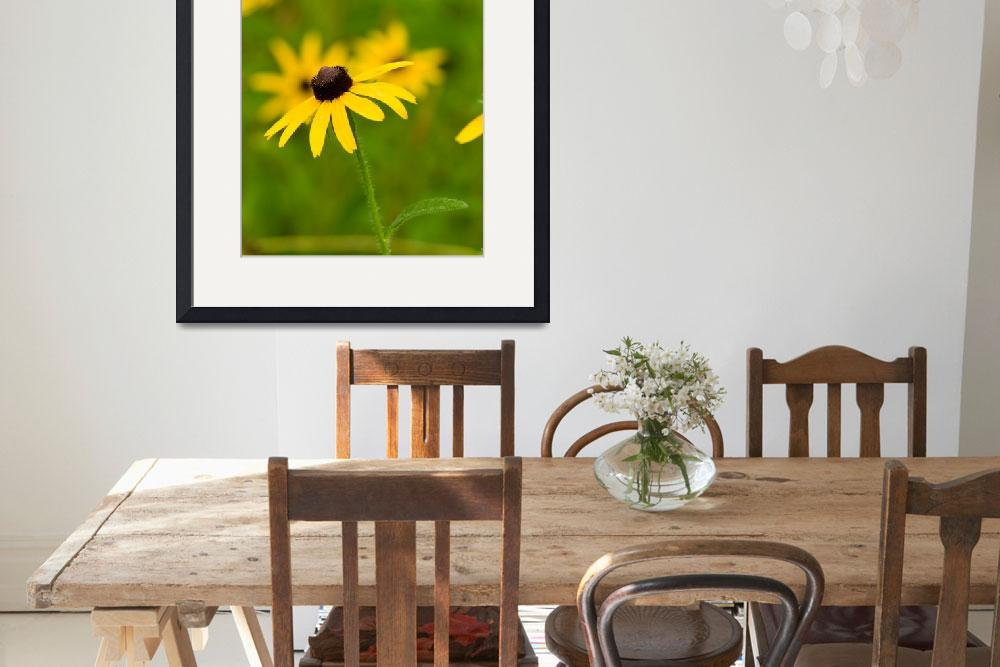 """""""Lovely Black-eyed Susan&quot  by tricia"""
