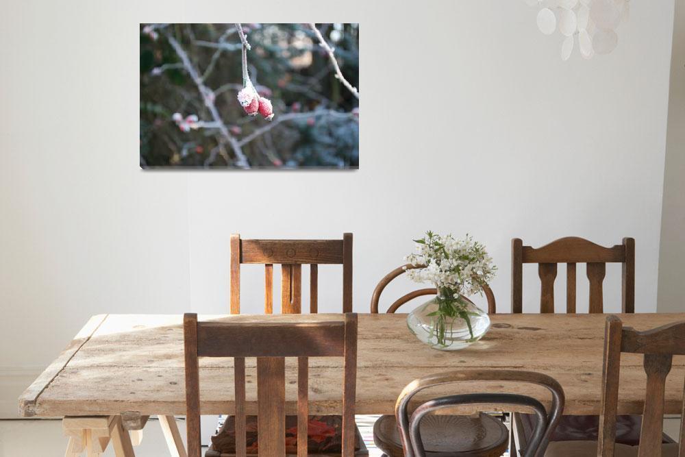 """Winter Berries&quot  (2008) by FifePhotographer"