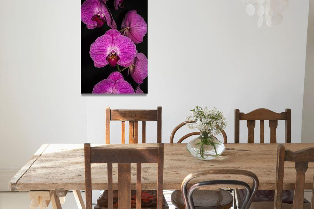 """""""Orchid Family&quot  (2014) by SoulfulPhotos"""
