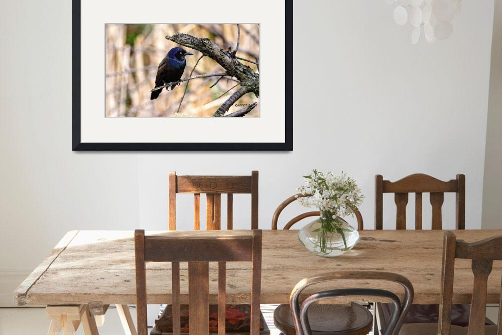 """""""A Male Common Grackle.&quot  by ROBERTSCOTTPHOTOGRAPHYY"""