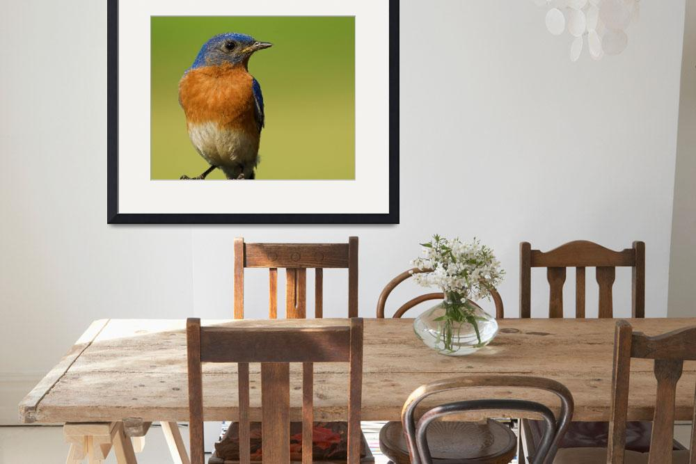 """""""Eastern BlueBird&quot  by tricia"""