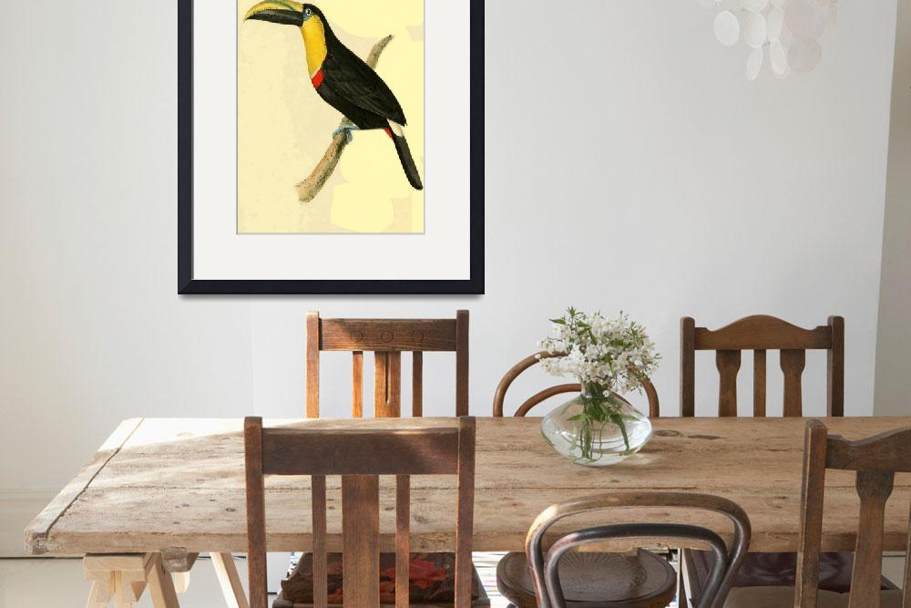 """""""Doubtful Toucan - PD Image&quot  by DelCalsione"""