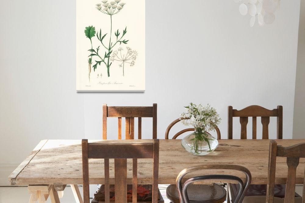 """""""Vintage Botanical Aniseed&quot  by FineArtClassics"""