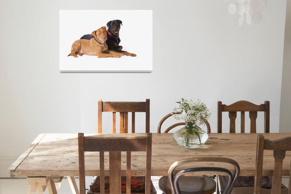 """""""A Pit Bull And A Rottweiller On A White Studio Bac&quot  by DesignPics"""