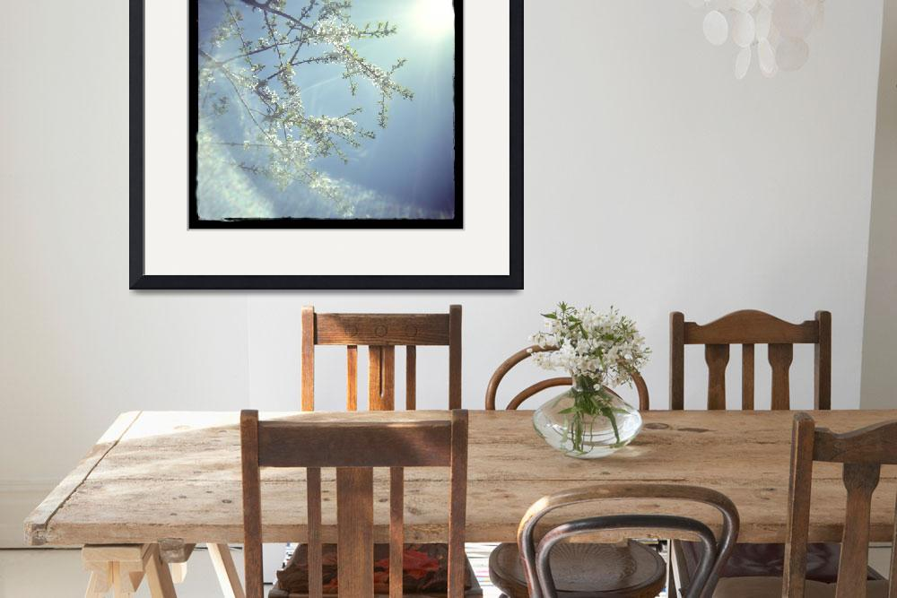 """Pear Blossoms&quot  (2007) by judystalus"