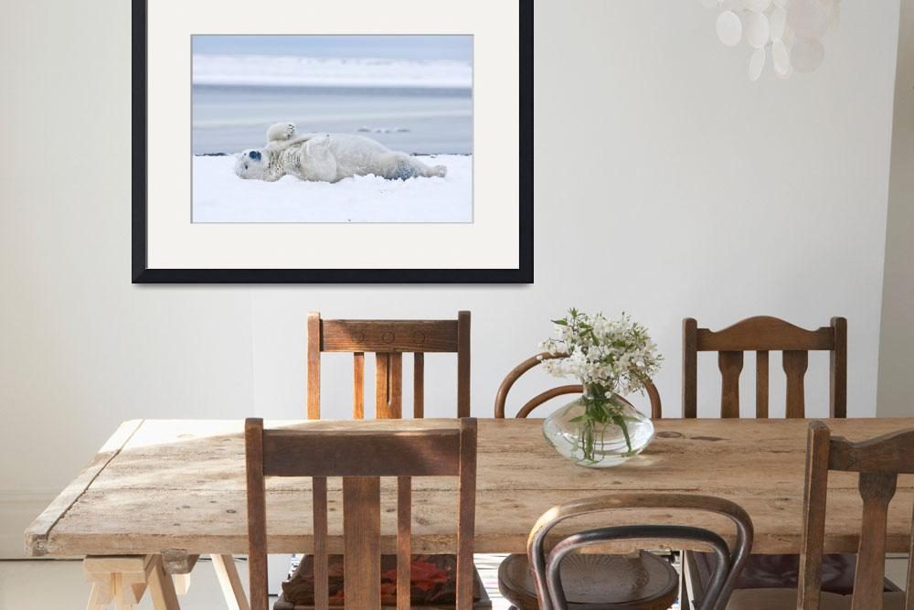 """""""Young Polar Bear boar rolling around in the snow a&quot  by DesignPics"""