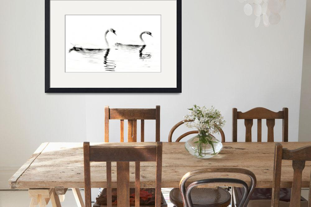 """""""Two Swans (High Contrast)&quot  (2010) by bavosiphotoart"""