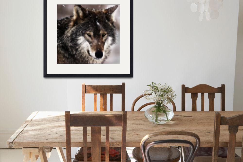 """""""Wolf&quot  (2011) by SamSmith"""
