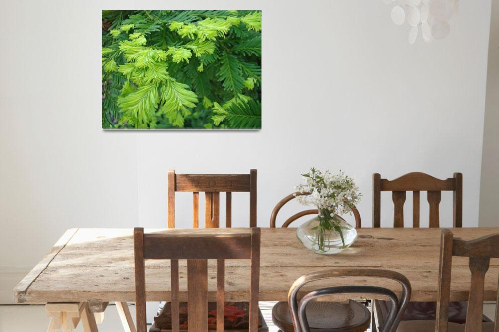 """""""Trees Redwood Tree branches art prints Conifers&quot  (2014) by BasleeTroutman"""