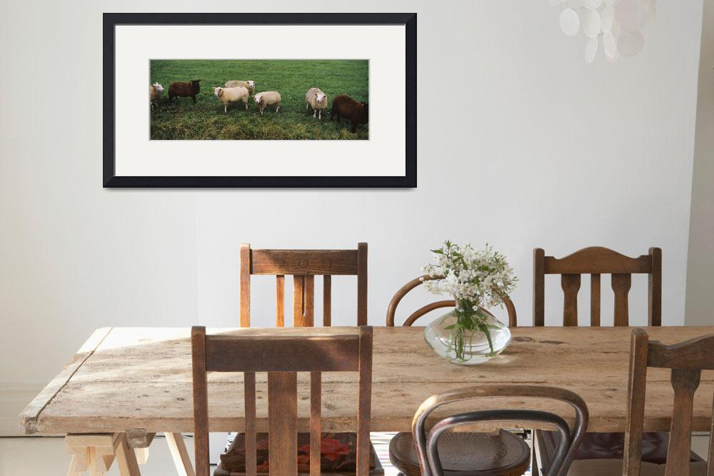 """""""High angle view of a group of sheep grazing in a&quot  by Panoramic_Images"""