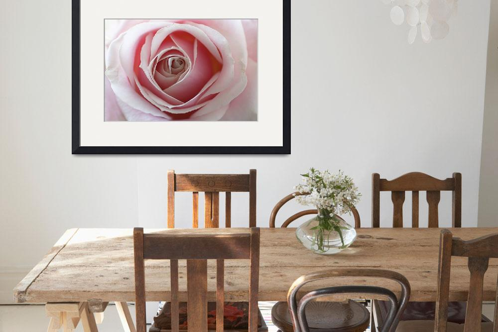 """""""Two Tone Rose""""  (2012) by edesigns15"""