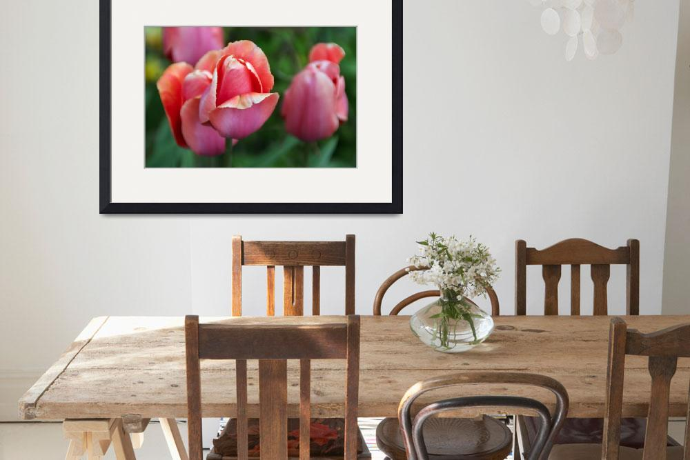 """""""Pink Tulips&quot  by AndreaMoorePhotography"""