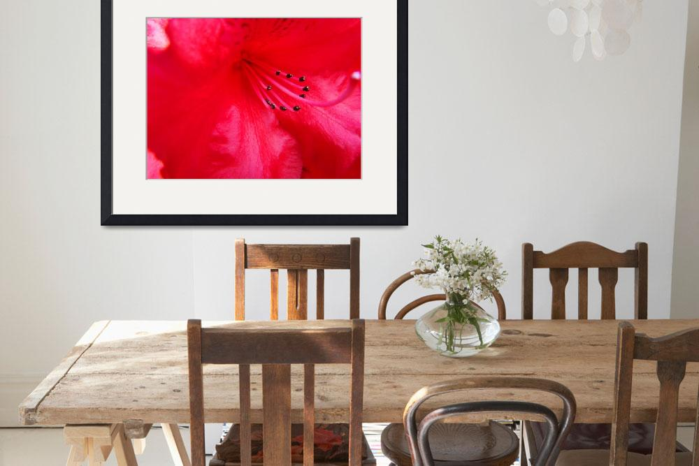 """Rhodie Red art print Rhododendrons Floral Macro&quot  (2010) by BasleeTroutman"