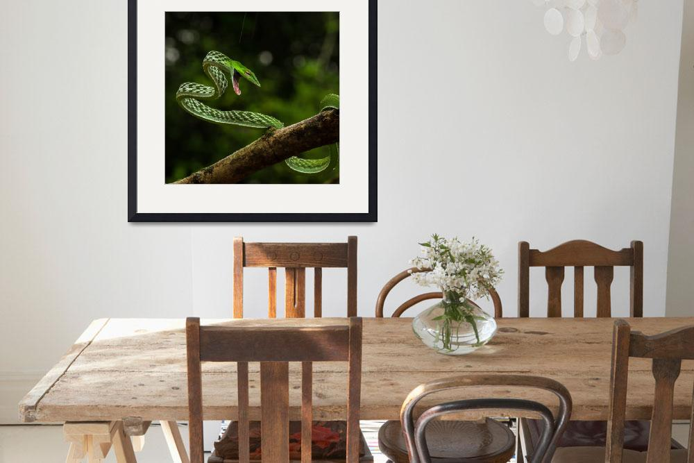"""""""Green Vine Snake, India&quot  (2017) by AnswersFound"""