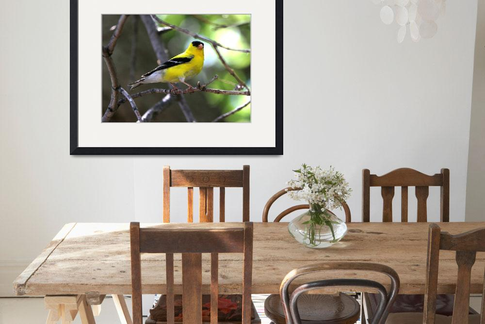 """""""Gold finch&quot  (2014) by cameragal"""