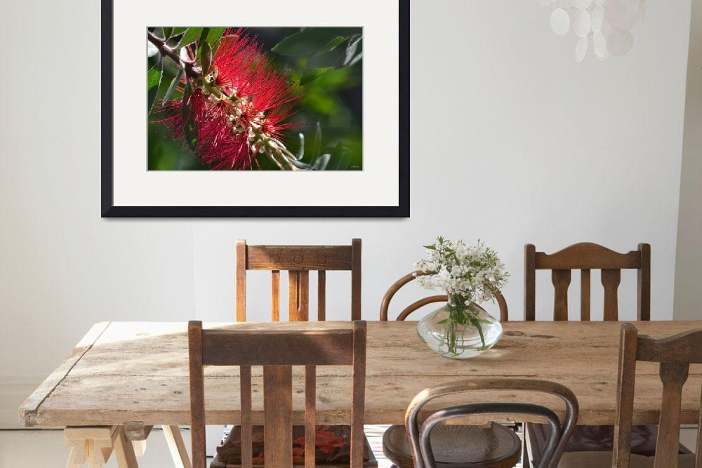 """Bottlebrush Flower&quot  (2012) by theblueplanet"