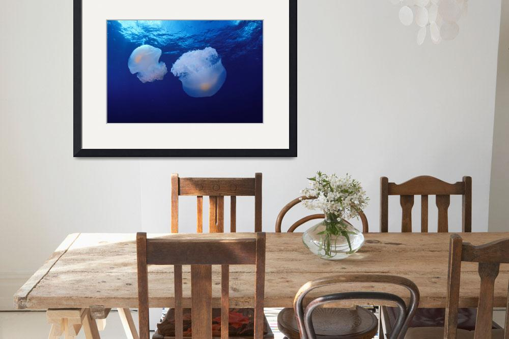 """Marshall Islands, Kwajalein Atoll, Pair Of Jellyfi""  by DesignPics"