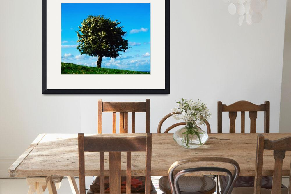 """White Hawthorn Tree&quot  by DesignPics"