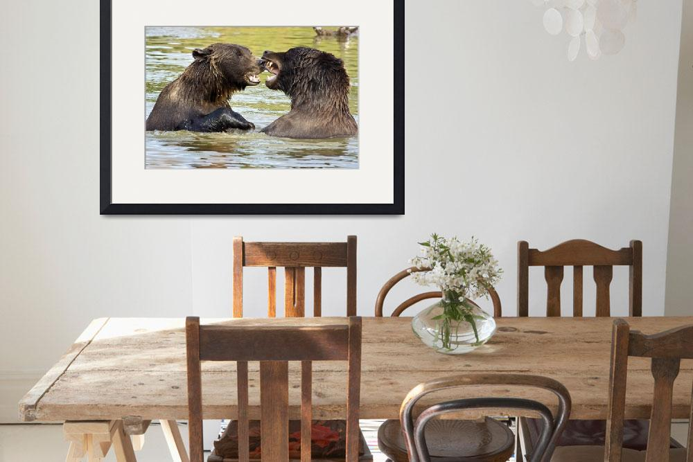 """""""Grizzly Bears play fighting at the Alaska Wildlife&quot  by DesignPics"""