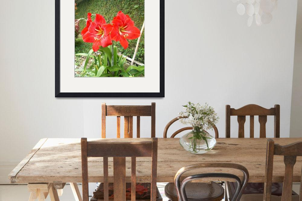 """""""Amaryllis red on the plants""""  (2017) by eru017"""