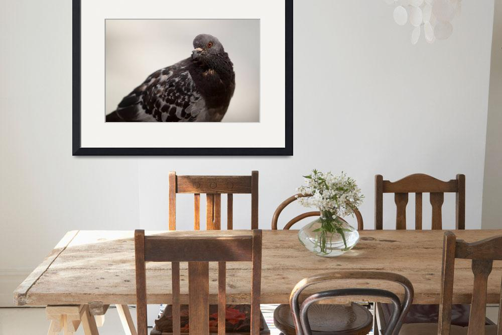 """""""Pigeon&quot  (2010) by andrewking"""