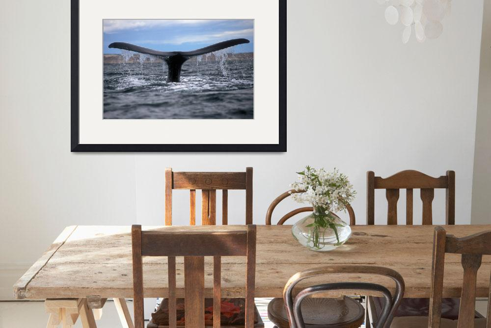 """""""Right Whale&quot  by Irudi"""