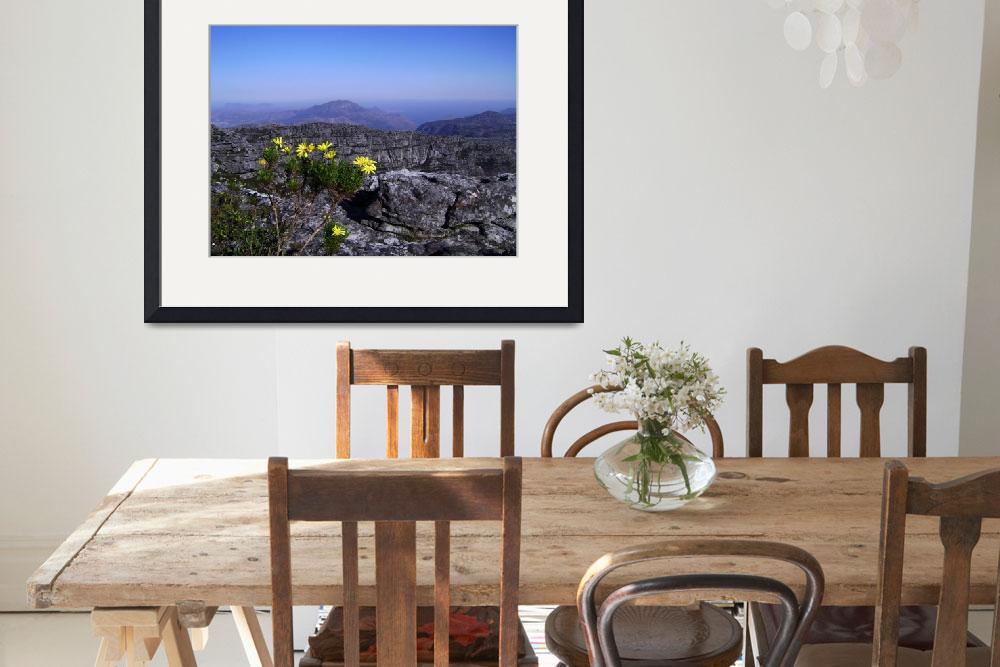 """""""Table Mountain Flower&quot  by notmovingpictures"""