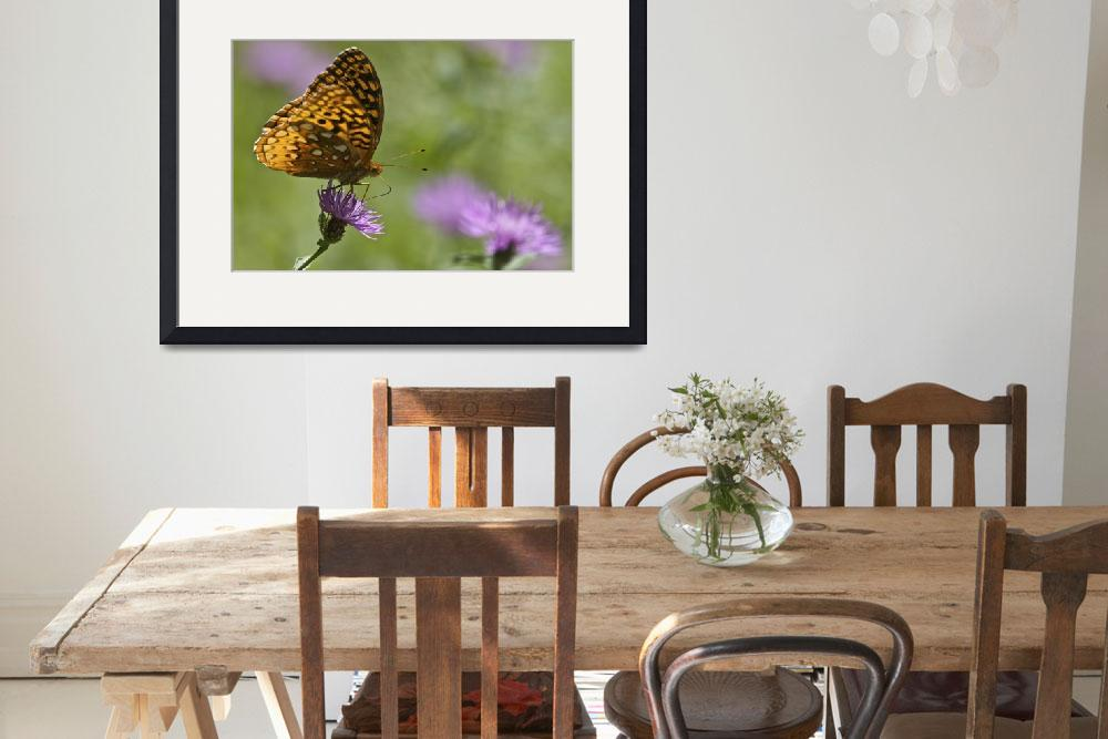 """""""Great Spangled Fritillary Butterfly""""  by jimcrotty"""
