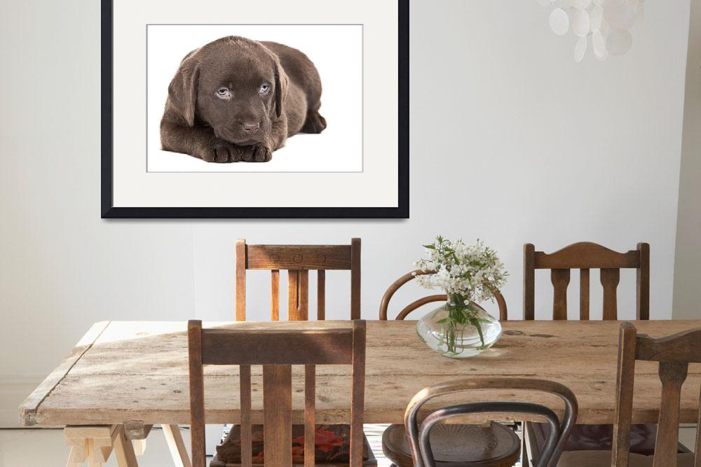 """""""Cute Chocolate Labrador Puppy&quot  (2009) by jmpaget"""