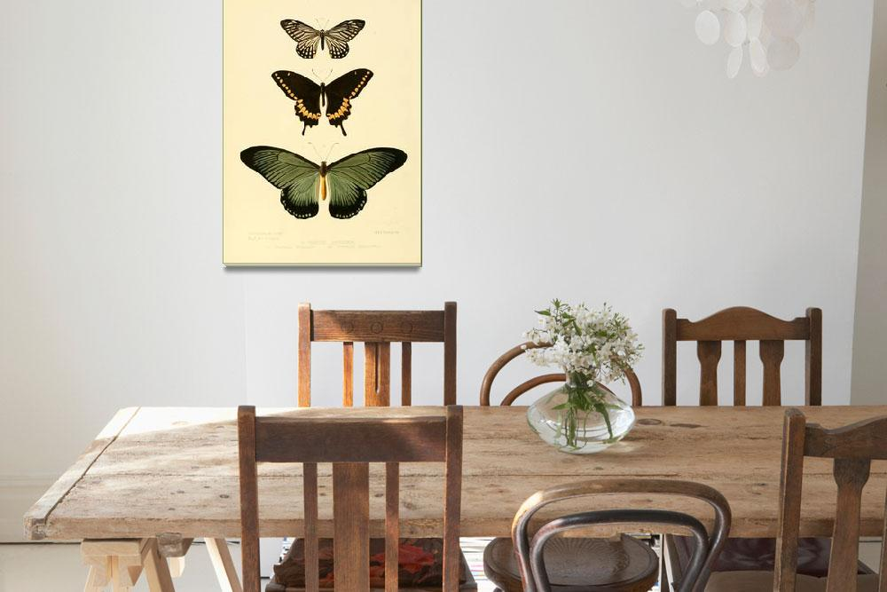 """""""Illustrations of new species of exotic butterflies""""  by motionage"""
