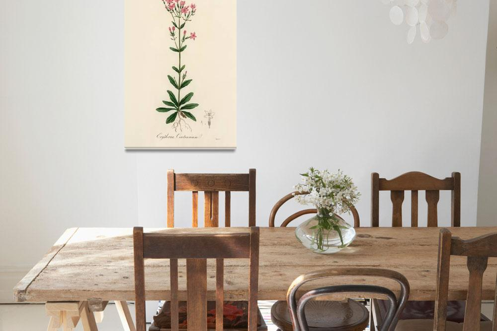 """Vintage Botanical European centaury&quot  by FineArtClassics"