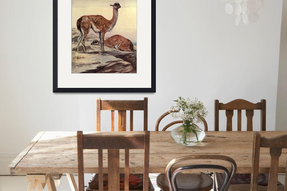 """Vintage Guanacos Painting (1909)""  by Alleycatshirts"