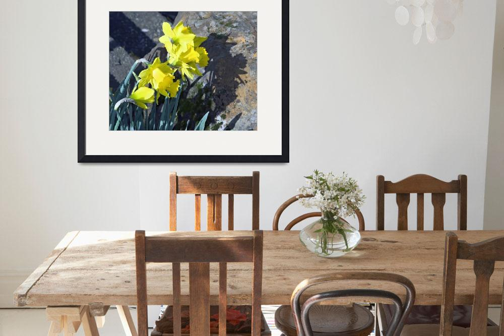 """""""Daffodils Surrounded by Rocks&quot  by cvpictures"""