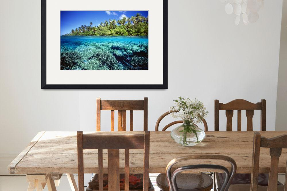 """""""Micronesia, Pohnpei Over/Under View Of Coral Reef,&quot  by DesignPics"""