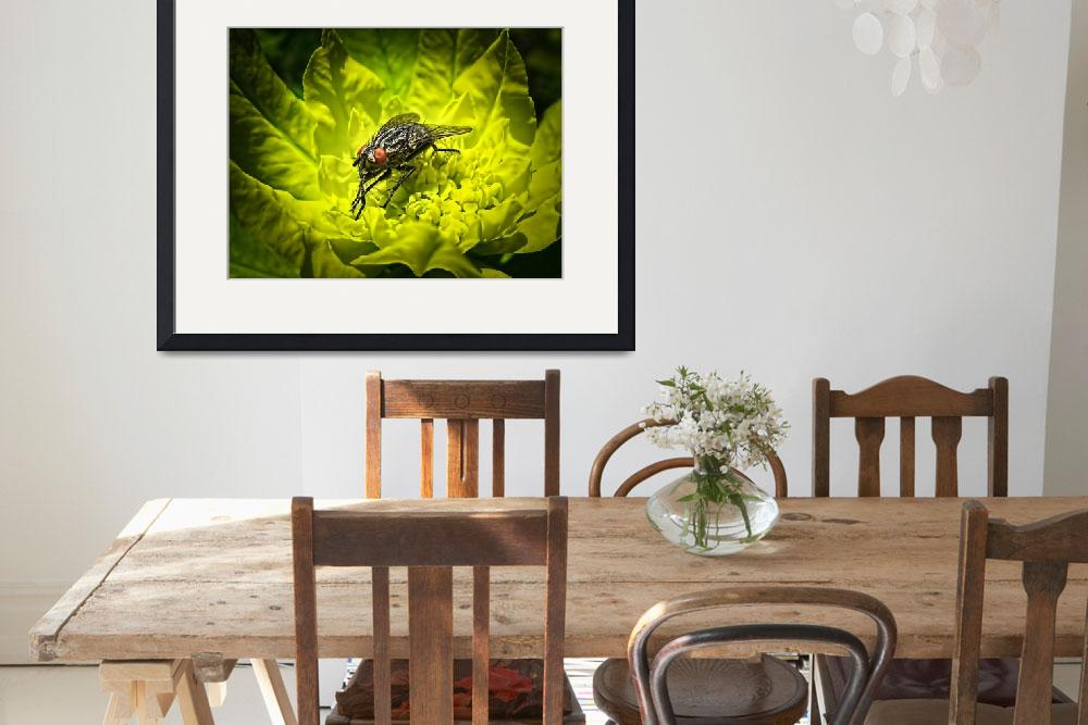 """""""Macro Photo of House Fly Sunning on a Yellow Leaf&quot  by Chantal"""