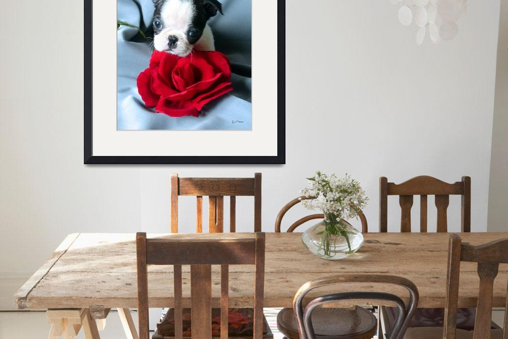 """""""Boston Terrier with Red Rose&quot  (2002) by ACuteProduction"""