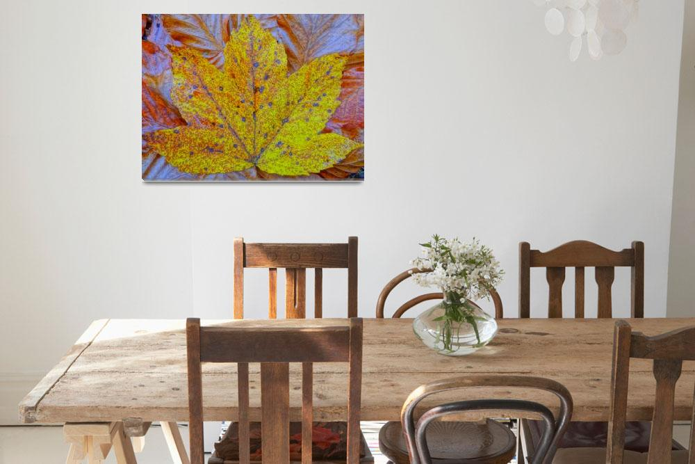"""""""Maple leaves in autumn""""  (2013) by arthop77"""