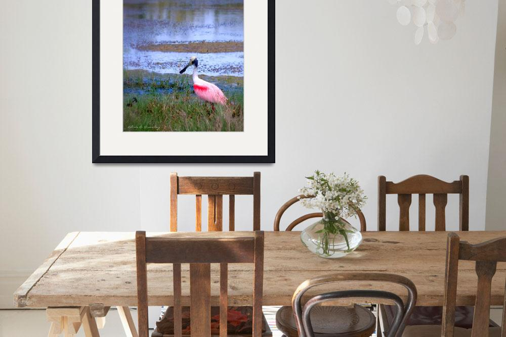 """""""Roseate Spoonbill in the Wild&quot  (2010) by ChrisCrowley"""