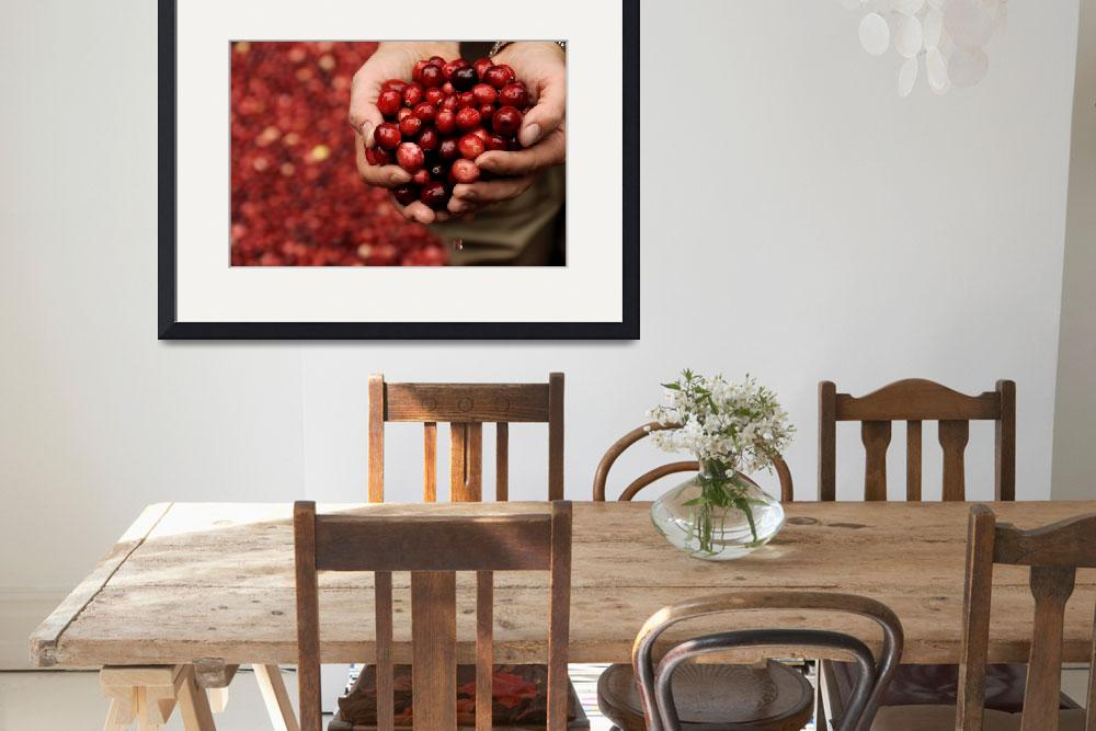 """Handful of Cranberries&quot  (2010) by WilshireImages"