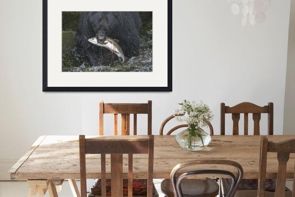 """""""Fishing Black Bear at Anan Creek&quot  (2009) by SederquistPhotography"""