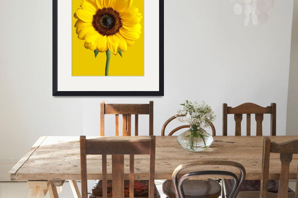 """""""Sunflower&quot  (2012) by keithtsuji"""