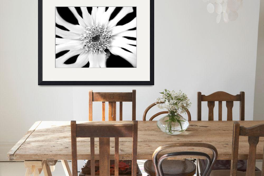 """""""White Flower 2 - Bold""""  (2011) by atalinamarie"""