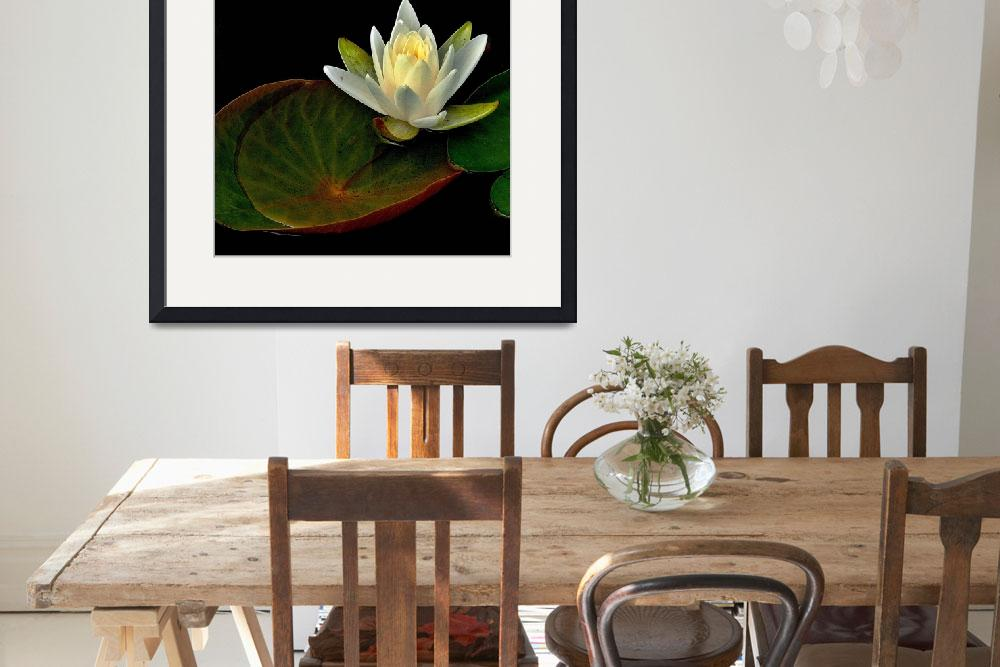 """""""Water Lily&quot  (2011) by bavosiphotoart"""