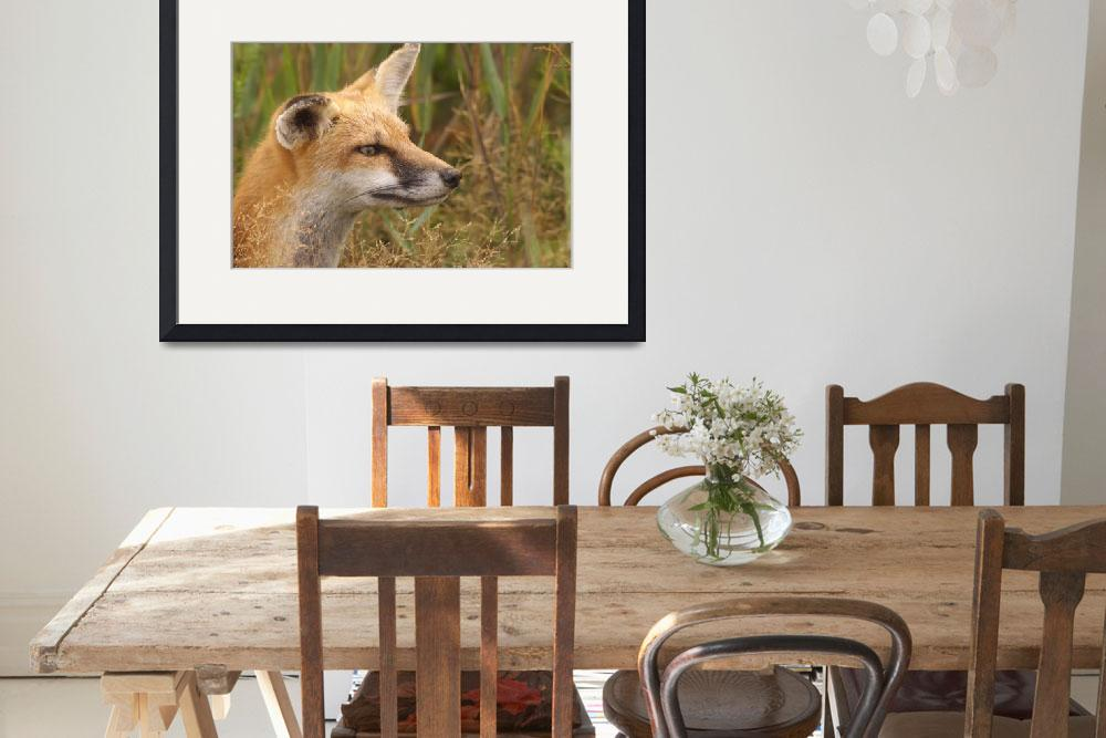 """""""Red Fox&quot  by alcaporaso"""