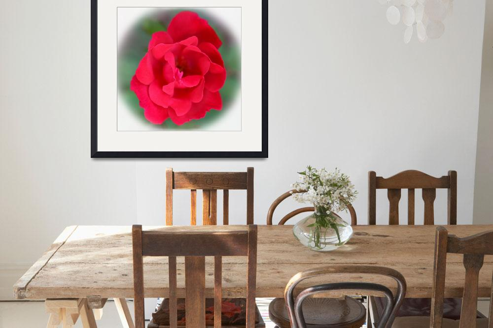 """""""Red Rose Square&quot  (2016) by KsWorldArt"""