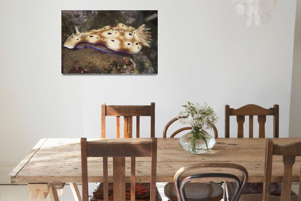 """Nudibranch feeding on algae, Papua New Guinea""  by stocktrekimages"