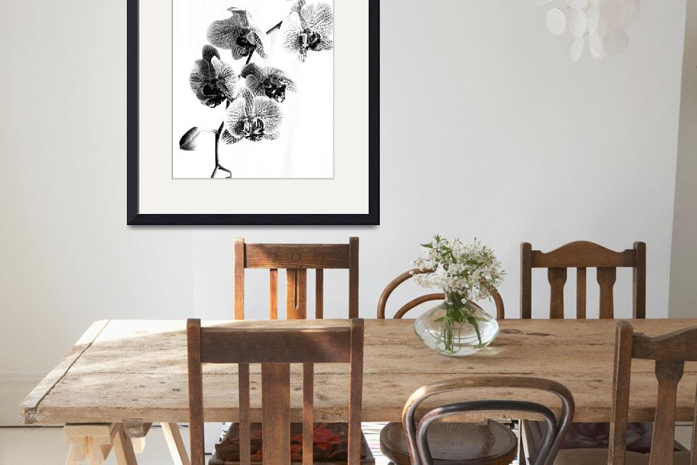 """""""Spotted Phalaenopsis or Moth Orchid in Black and W""""  (2009) by walbyent"""