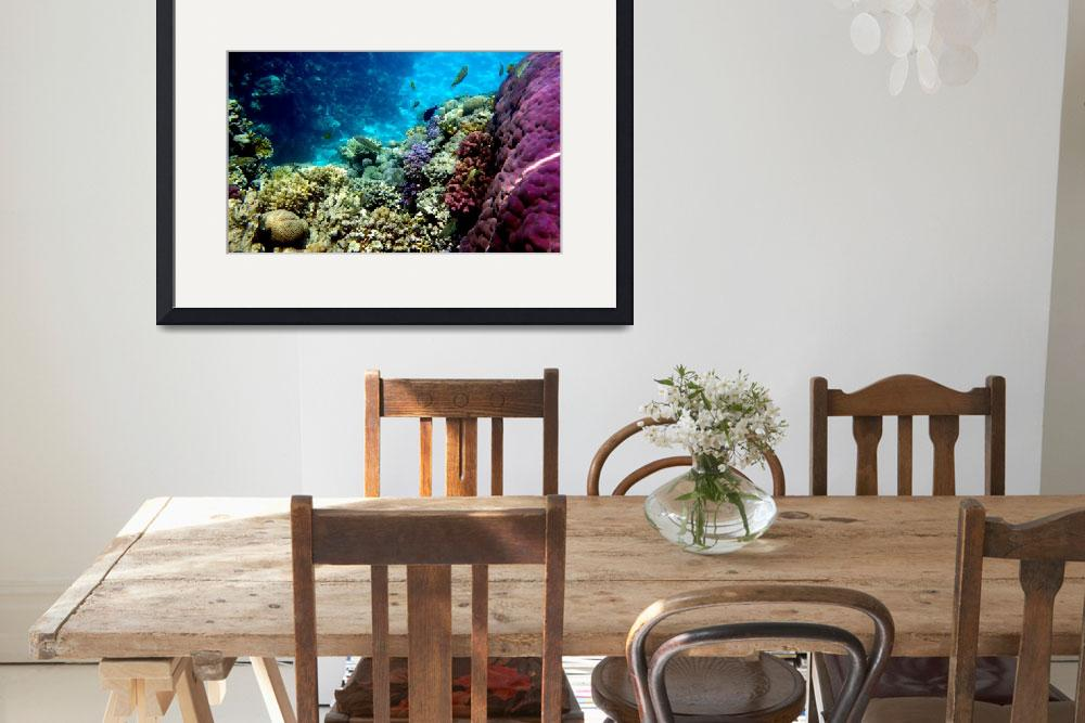"""reef""  by phototes"