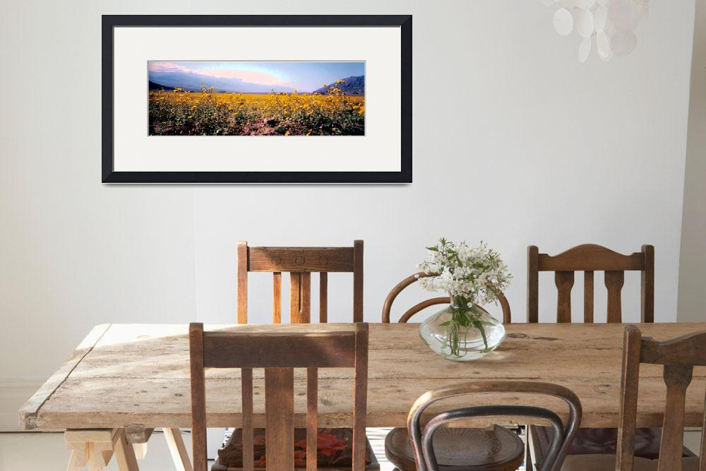 """""""Death Valley Flowers""""  (2008) by Minear1"""